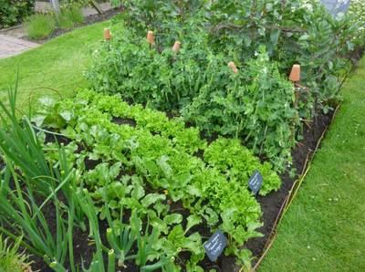 Sat-Apr 18-2020 11 am Vegetable gardening Basics 200418111